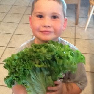 Sweet Brownie #3 snacking on his head of lettuce.