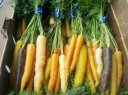 Local Rainbow Carrot