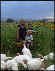 Turkey Farm Picture
