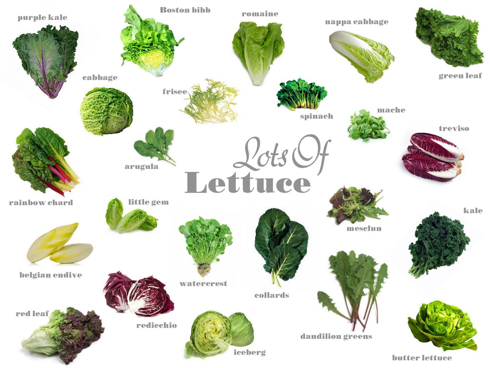 Know Your Produce Lettuce Varieties Soil
